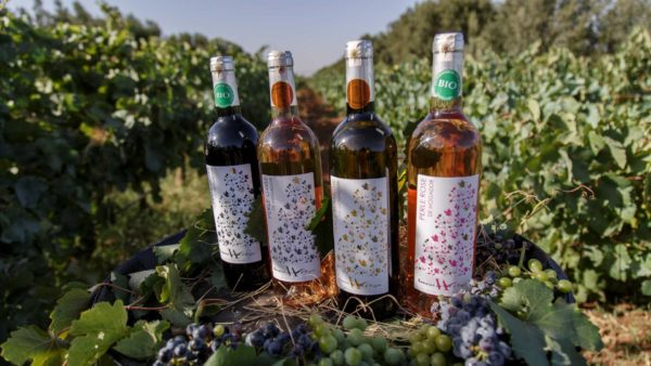 Moroccan Wines