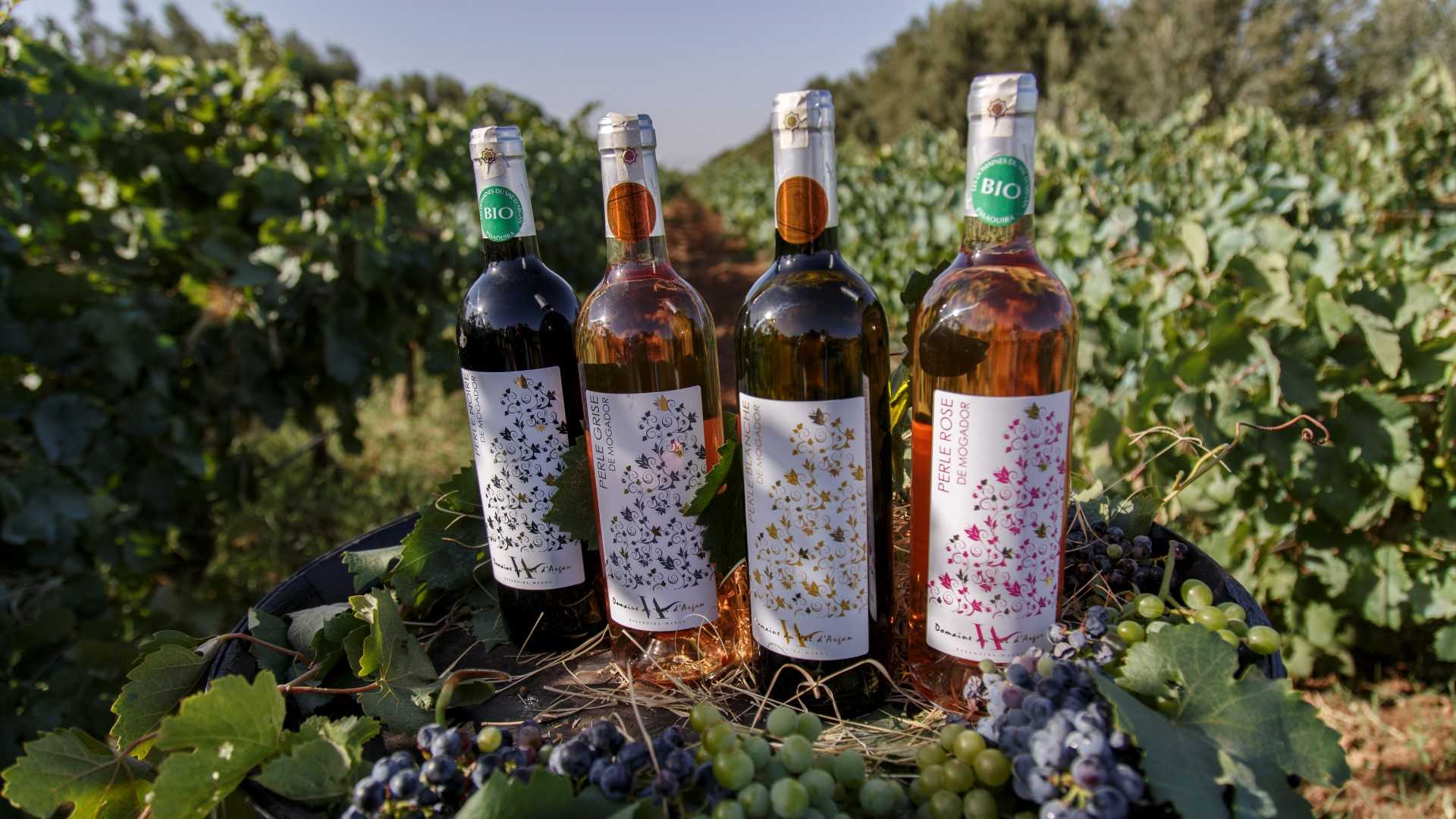 Vin Marocain