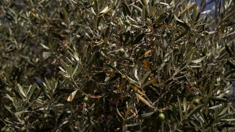 Huile d'argan et d'olive